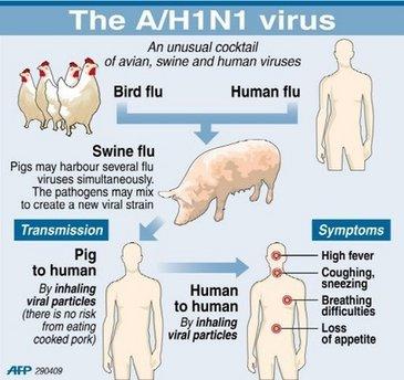 El planeta adolescente de la gripe porcina