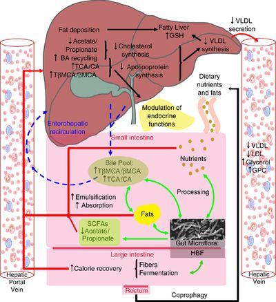 ciclo de esteroides para definicion extrema