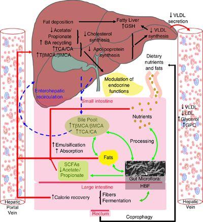 ciclo de esteroides para aumentar masa muscular rapido