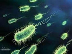 infecciones bacterianas