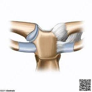 articulacion esternoclavicular